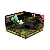 Glow Mushroon Cave